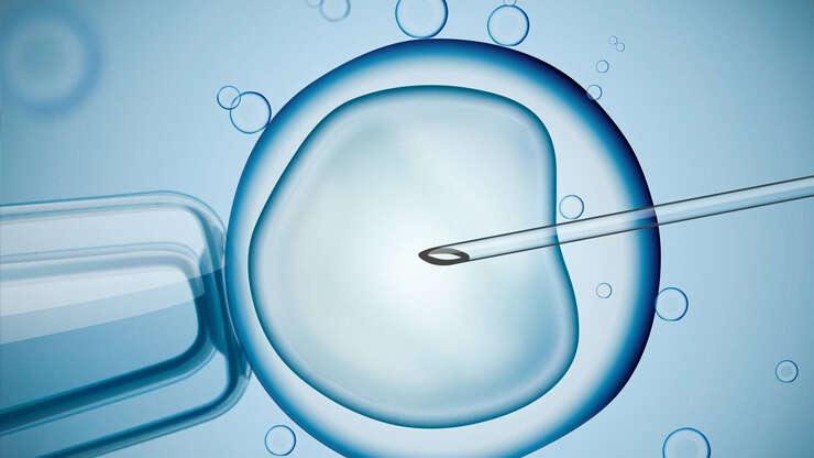 IVF & ICSI Process